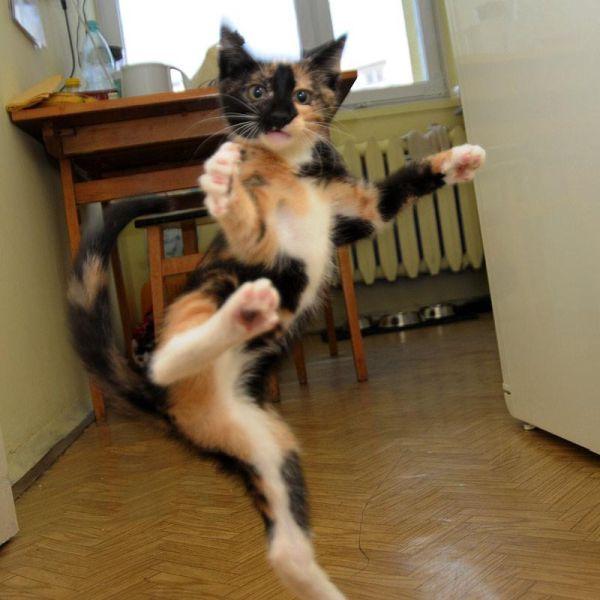Karate Cats - Cat humor