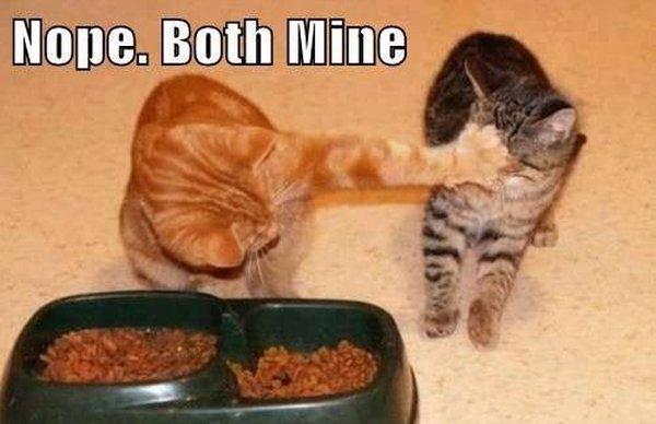 Selfish Cat - Cat humor