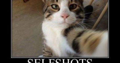 Selfshots - Cat humor