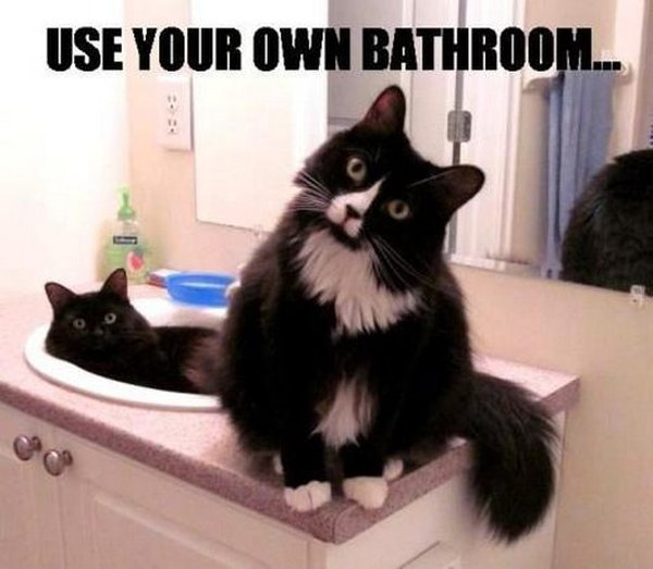 This Is Our Bathroom - Cat humor