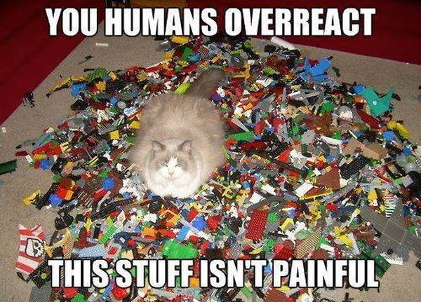 You Humans Overreact - Cat humor
