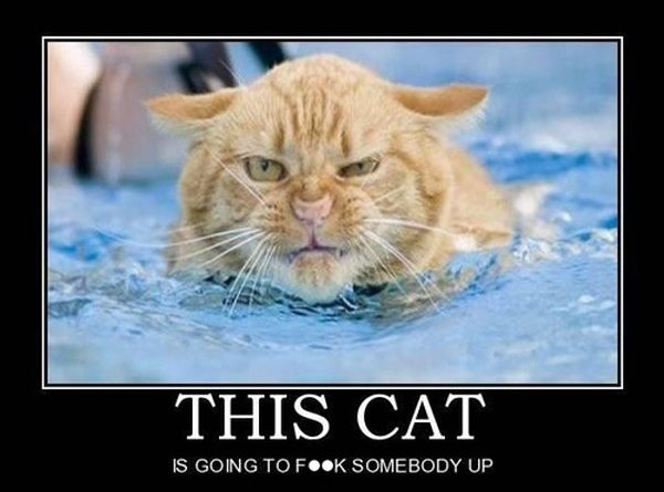 Angry Cats -Cat humor