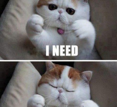 I Need Hugs - Cat humor