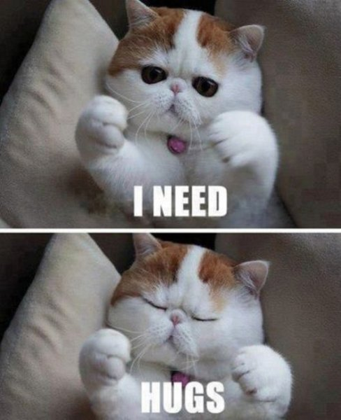 I Want To Cuddle With You Quotes: I Need Hugs