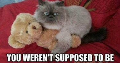 Busted! - Cat humor