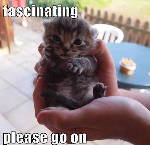 Fascinating - Cat humor