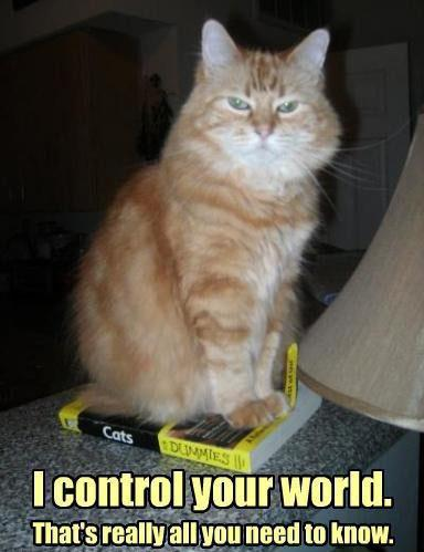 I Control Your World - Cat Humor