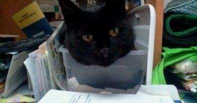 If It Fits I Sits - Cat humor
