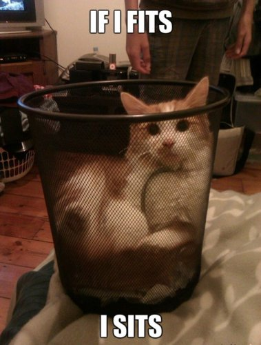 If It Fits I Sits - Cat humor