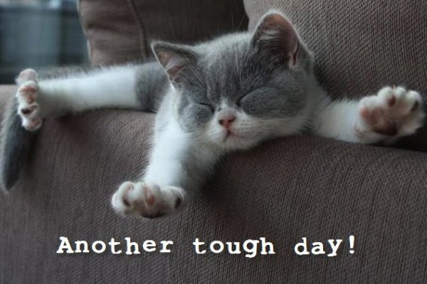 Another Tough Day - Cat humor