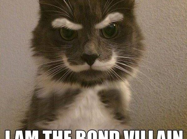 Bond Villain - Cat humor