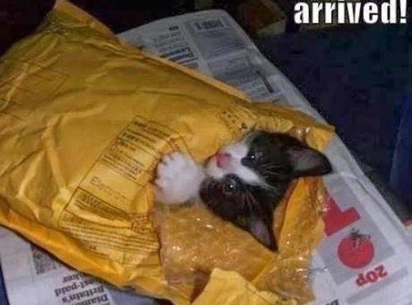 Cat Lady Starter Kit - Cat humor