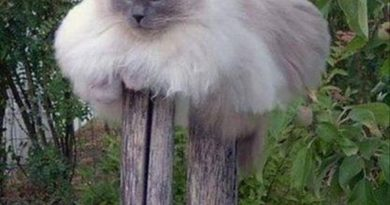 Cat Tree - Cat humor