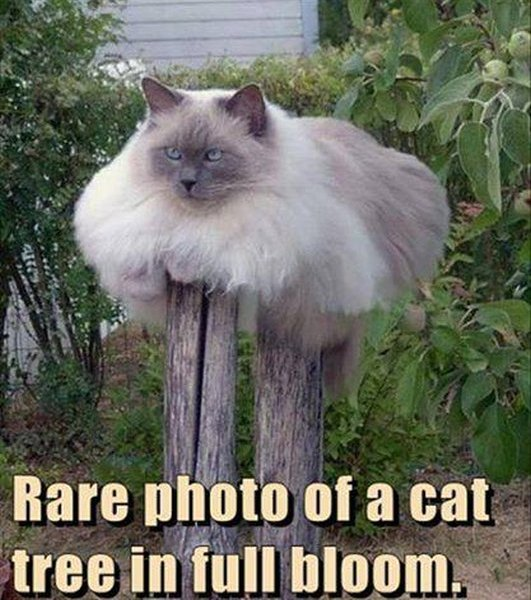 Cat Tree - Cat humor