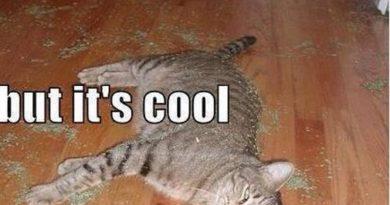 Catnip Toy Broke - Cat humor