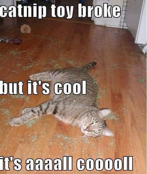 Catnip Toy Broke - Cat humor