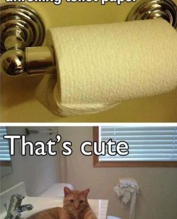How To Prevent Your Cat From Unrolling Toilet Paper - Cat humor