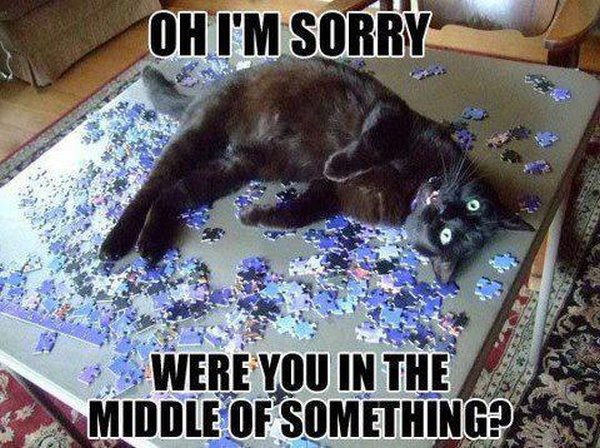 Oh I'm Sorry! - Cat humor