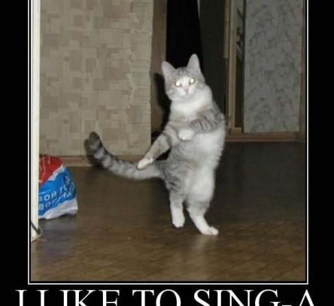 I Like To Sing-a - Cat Humor