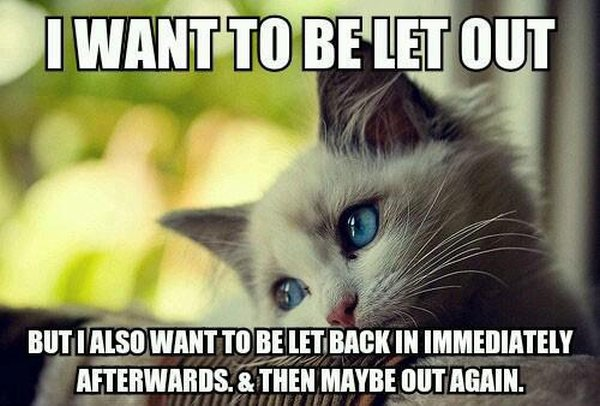 I Want To Be Let Out But... - Cat humor