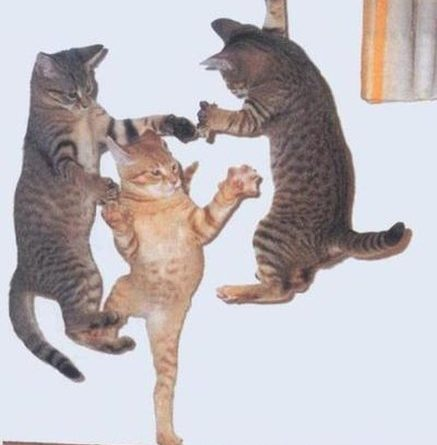 Jump Around! - Cat humor