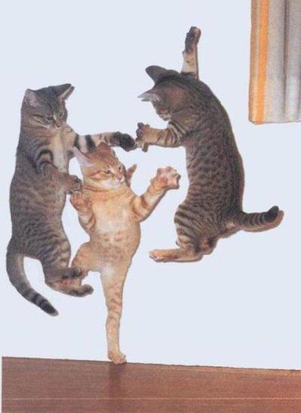 Jump Around! - Cat humor