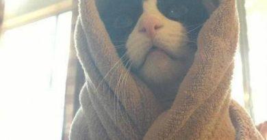 Obi Wan Catnobi - Cat humor