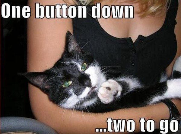 One Button Down... - Cat humor