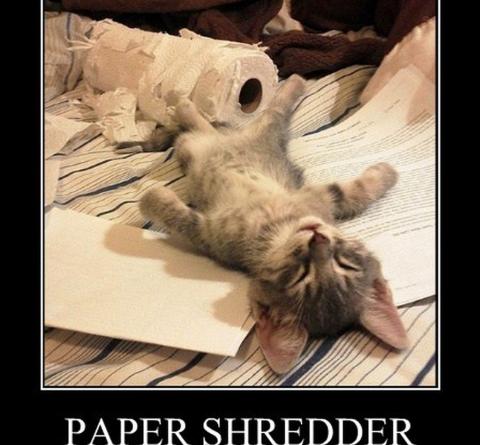 Paper Shredder Down - Cat humor