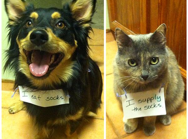 Partners In Crime - Cat humor
