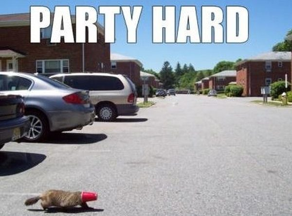Party hard - Cat humor