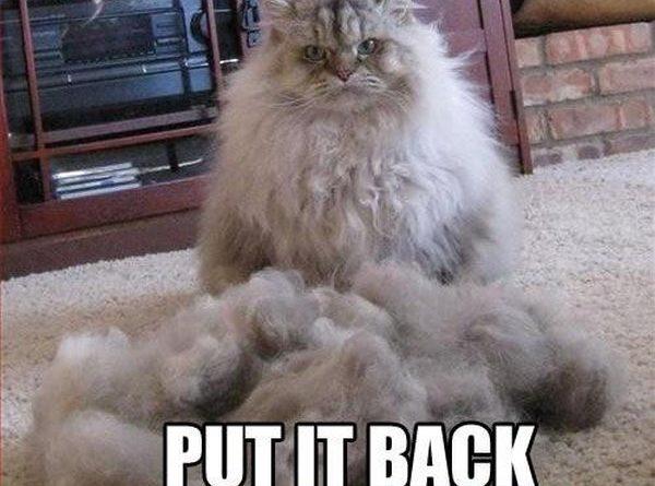 Put It Back - Cat humor