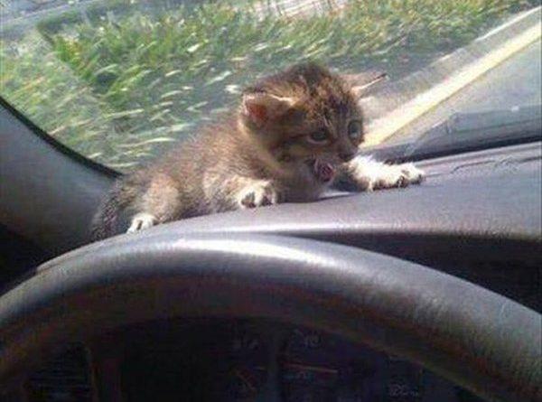 Slow Down! - Cat humor