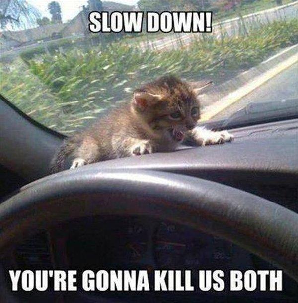 Slow Down! - Cat humor