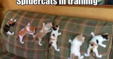 Spidercats In Training - Cat humor