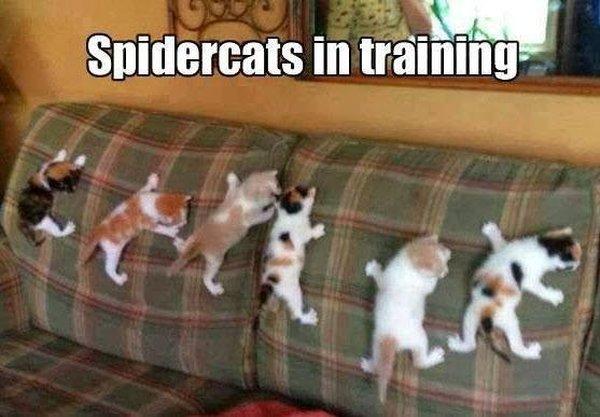 Spidercats In Training - Cat humor