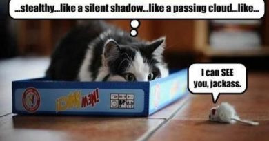 Stealth Cat - Cat humor