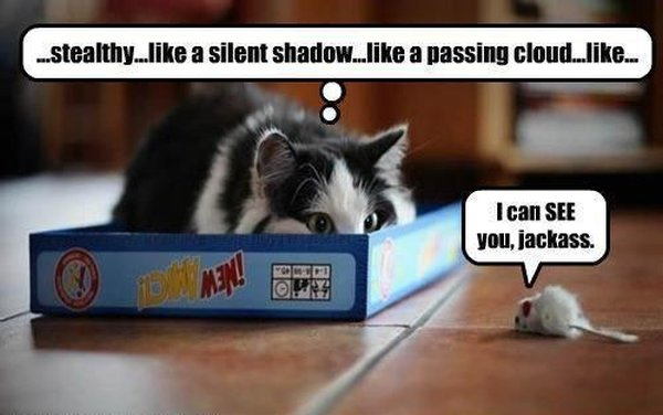 Stealth Cat - Cat humor