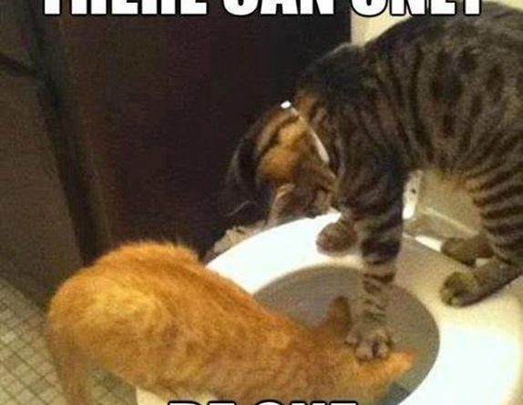 There Can Only Be One - Cat humor