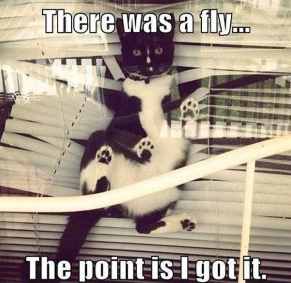 There Was A Fly... - Cat humor