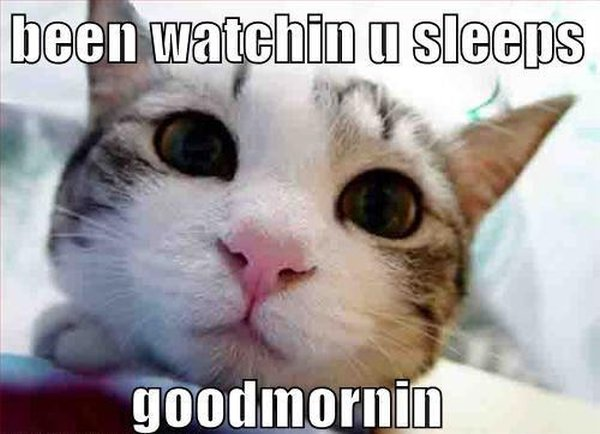 Good Morning - Cat humor