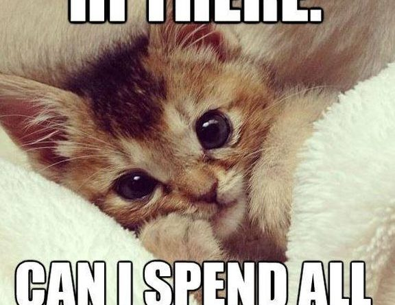 Hi There - Cat humor