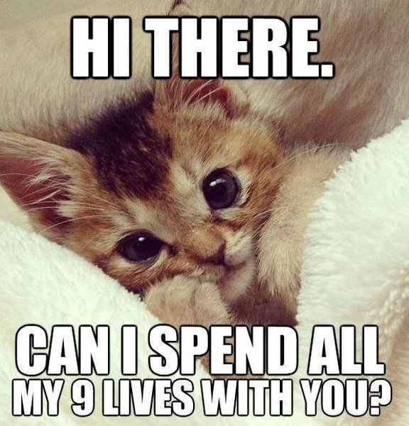 Funny Animal I Love You Quotes : Go Back > Gallery For > Funny Cat Hi