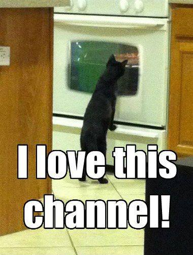 I Love This Channel - Cat humor