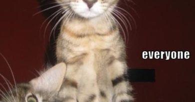 Idiot Friends - Cat humor