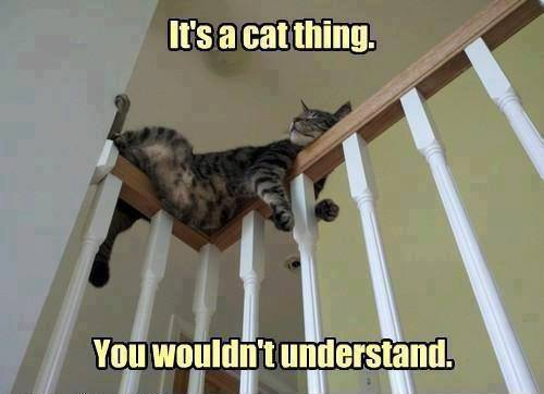It's A Cat Thing... - Cat humor