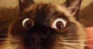 What?!?! - Cat humor