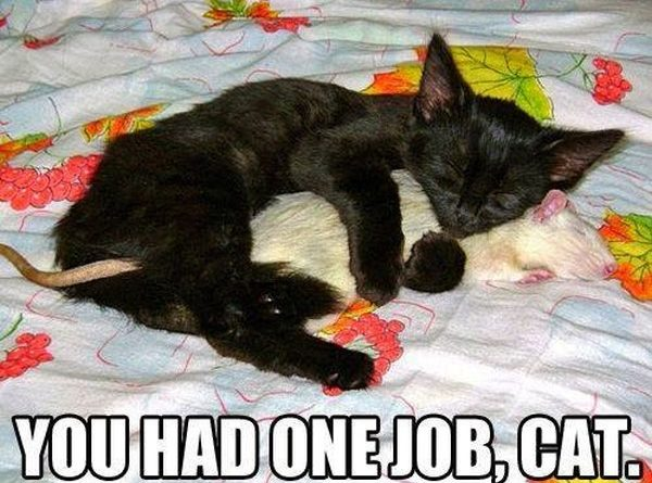 You Had One Job, Cat - Cat humor