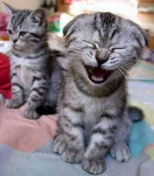 Funny Cat One Liners - Cat humor