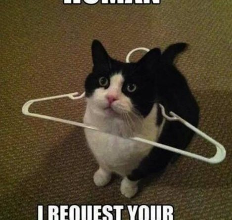 Human I Request Your Assistance - Cat humor